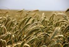 FAO: tovább nőttek azélelmiszerárak szeptemberben